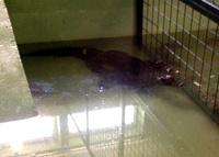 pic balatonszarszo krokodilzoo