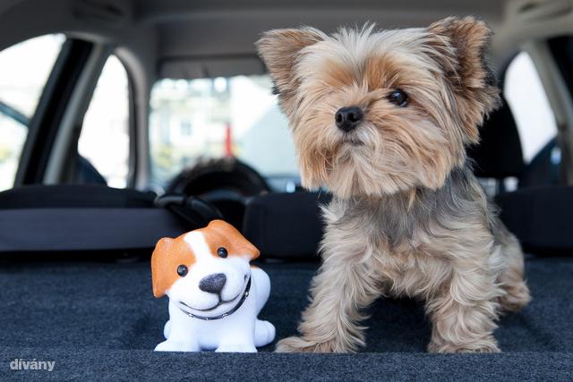 Megérkezett Nenszike is, a szerkesztőség egyik kedvenc kutyája. Vaúúúú!                         Ja, persze ő nem ciki, a mellette mosolygó bólogatós viszont nagyon is az! 950 forintért utóbbit már haza is viheti.                          Előző nem eladó, simogatni lehet, csak szóljon!