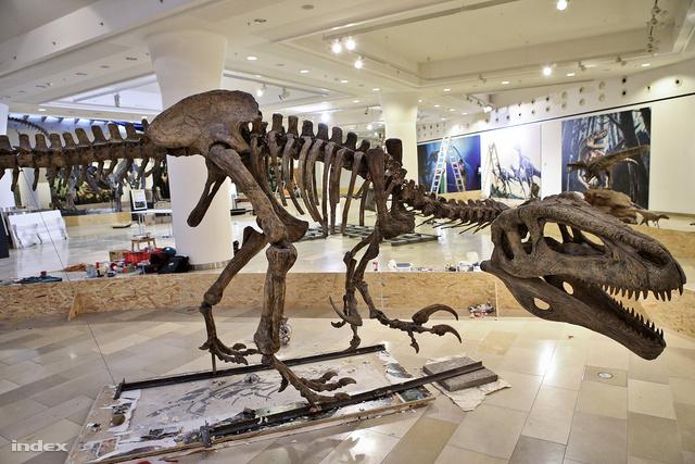 Az egyik nagy gyerekkedvenc, a Megaraptor namunhuaiquii csontváza