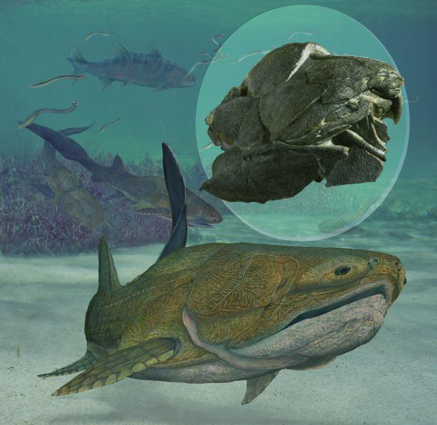 A talált fosszília és az azalapján készült fantáziarajz
