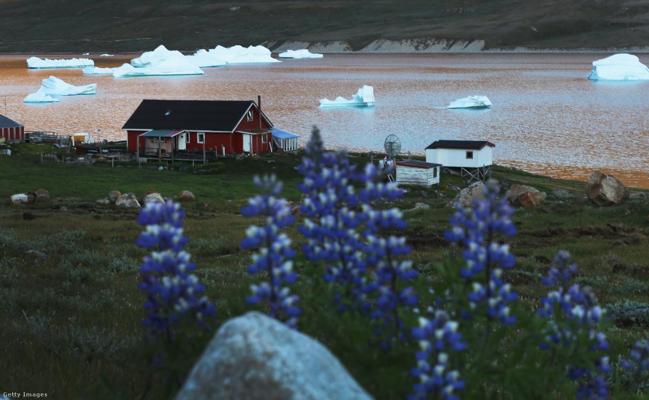 Jéghegyek és virágok az egyik paradicsomföld szomszédságában. Grönlandon vannak olyan részek, ahol kis túlzással az ablakból kinézve rögtön fókakat és bálnákat láthat az ember, olyan közel úsznak a parthoz.