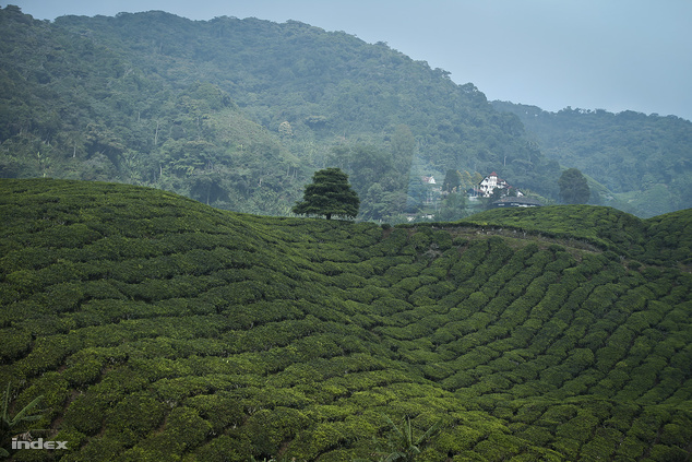 Malajzia - A jólétéről és rendezettségéről híres délkelet-ázsiai ország új látványosságai miatt került a listára. Melakában a térség legnagyobb madárparkja, Nusajayában Legoland és Hello Kitty Land nyílik meg. De fejlesztik a kerékpáros turizmust is, főként Kuala Lumpur és Penang környékén. A dzsungelkalandra és orángutánokra vágyók Borneó szigetén találják meg számításaikat, aki pedig meseszép teaültetvényekre kíváncsi, a képen szereplő Cameron-felföldre látogasson el Malajziában.