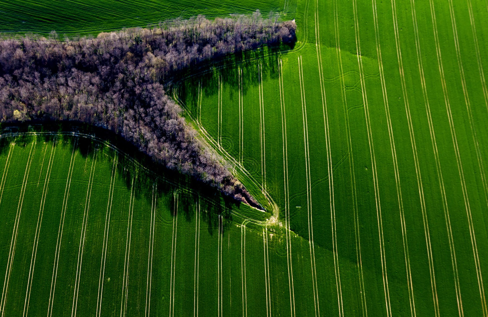 Új ruhában Művelés alatt álló mezőgazdasági terület Oroszló közelében