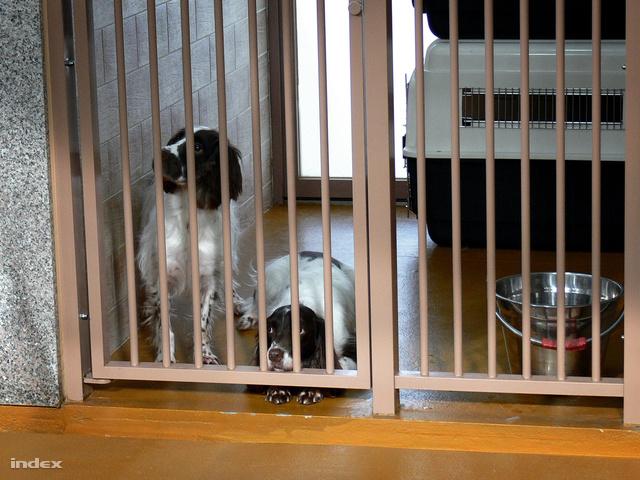 Ők, a foltosak a termeszkereső kutyák. 2007 óta vesznek részt a koreai kulturális örökség megőrzésében azzal, hogy felkutatják és merev bámulással jelzik a faépítményeket tönkretevő termeszeket.