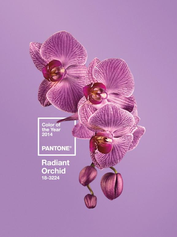 Ilyen a ragyogó orchidea