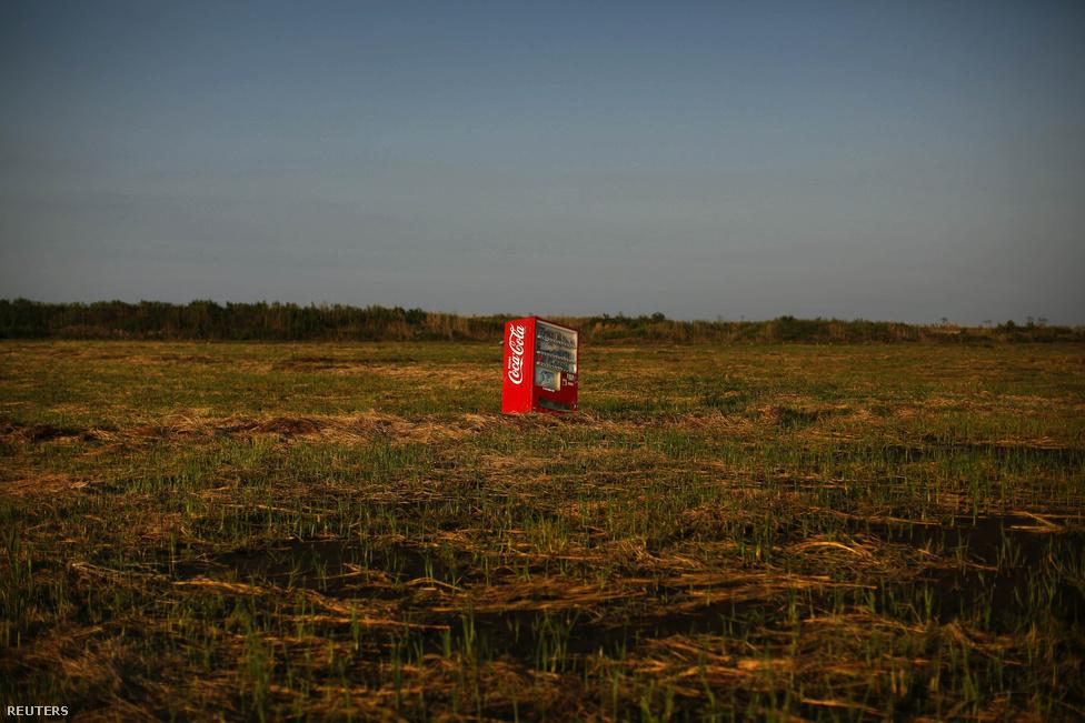 A kólaautomata magányossága. Még a 2011 márciusi földrengést követő cunami ragadta magával, és hagyta egy kietlen rizsföldön Fukusima közelében.