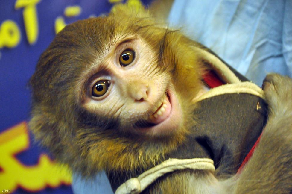 Az első iráni űrhajós egy majom, aki január 28-án járta meg a kozmoszt Irán űrprogramjának eddigi legnagyobb sikereként. A majmot 120 kilométeres magasságba lőtték fel egy rakétával, kisebb szépséghiba, hogy az űrben járt állatról kiadott képek egy része egy másik állatot ábrázolt. Vagyis nem tudni, tényleg sikeres volt-e az utazás. Azóta mindenesetre december közepén állítólag egy második majmot is sikeresen juttattak fel, majd vissza is hoztak a Földre.