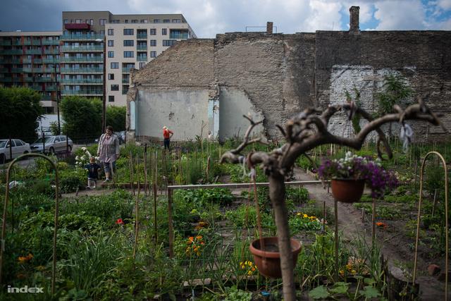 Közösségi kert a VIII. kerületi Leonardo utcában