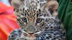Megismeri, kik születtek az állatkertben? Kvíz