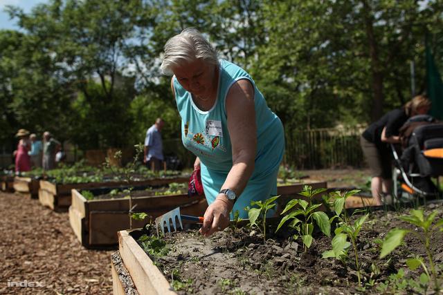 Legtöbbször a közösségi kertek is ideiglenesen hasznosított ingatlanokon működnek