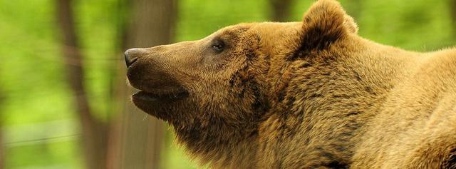 medve vadaspark