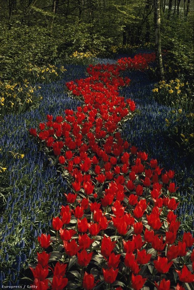 Hollandia: Keukenhof Gardens