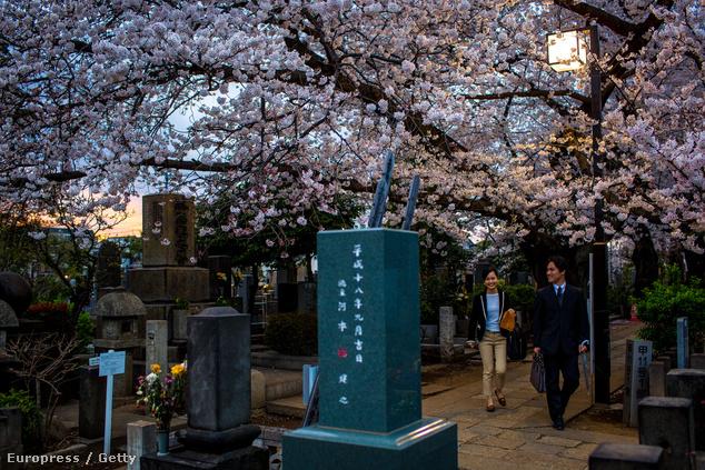 A Janaka temetőben is virágdíszben állnak a fák