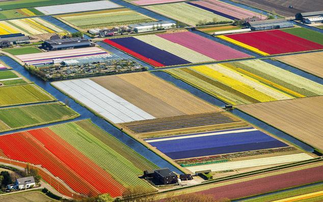 Légi felvétel tulipánmezőkről a nyugat-hollandiai Lisse város közelében