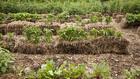 Lusta kertészek szíve csücske: a szalmakert