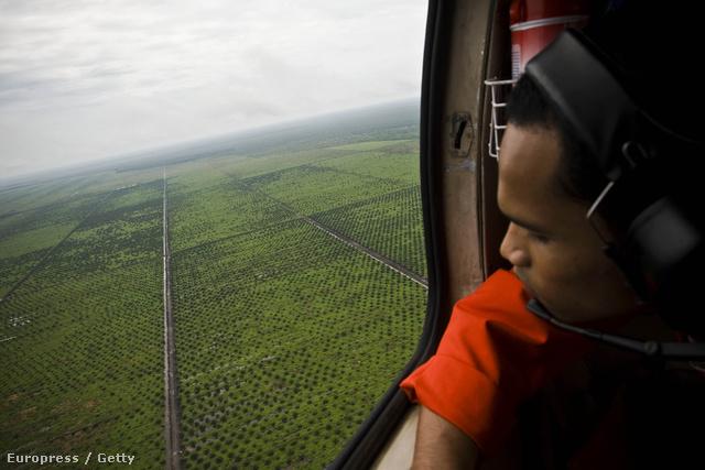 Pálmaültetvény a levegőből Szumátrán