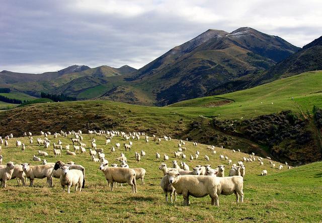 Az Új-zélandi szigetvilág a föld legelszigeteltebb, de az egyik legizgalmasabb utazási célpontja