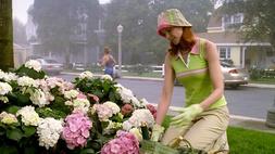 6+1 kertészkedős tipp kezdő Bree Van De Kampeknek