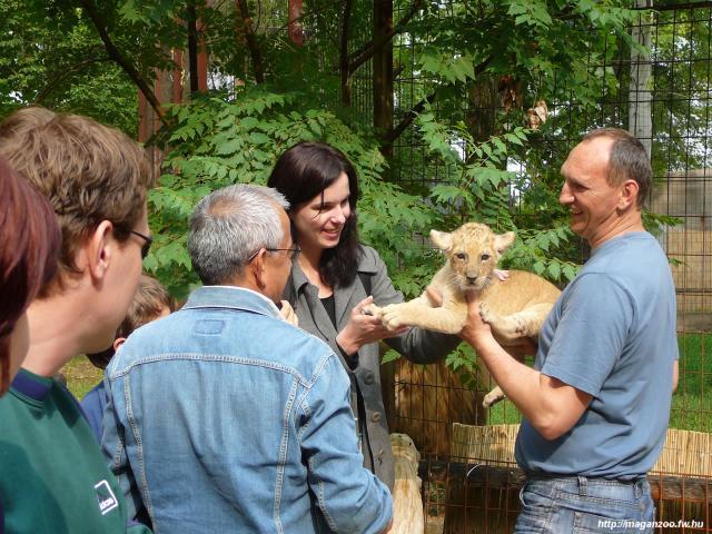 Az abonyi MagánZoo állatsimogatójában több apróbb termetű állattal is testközeli kapcsolatba kerülhetünk
