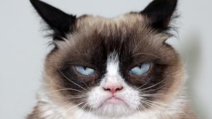 Grumpy Cat marha boldog: könyve jelent meg