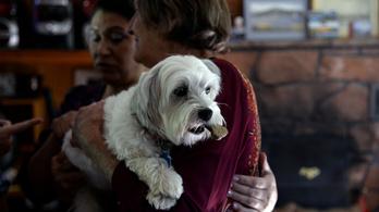 Magyar kutatás: kutyákra is hat a placebo