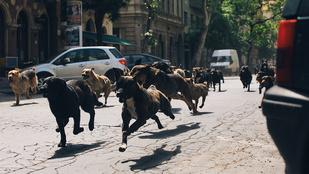Mundruczó kutyái indulnak az Oscar-ért!