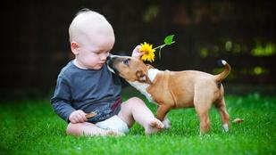 Állat+kisgyerek: minél több, annál jobb!