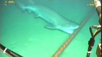 A cápák megtámadták az internetet