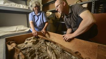Találtak a pincében egy 6500 éves csontvázat