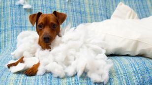 7 tipp, hogy a kiskutyából ne legyen hisztis szörnyeteg