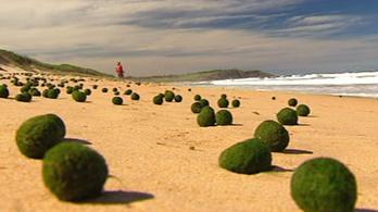 E.T. tojásait hordta partra az óceán