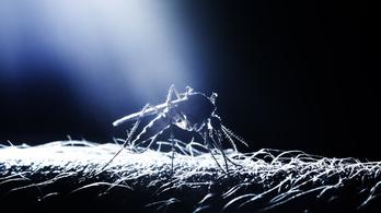 Miért nem terjesztik a szúnyogok az AIDS-et?