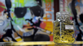 A marihuána erősebb, mint valaha