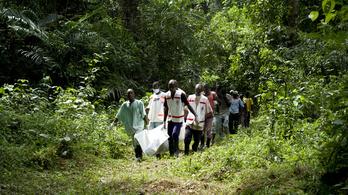 Kilenc nap alatt 312 ebola-halott