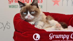 Grumpy Cat nagyon utálta a sajtóeseményét
