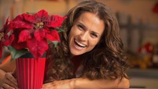 Így lesz szép a mikulásvirága és a karácsonyi kaktusza