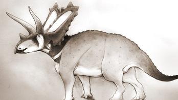 Új dinoszauruszfajt találtak egy múzeumban