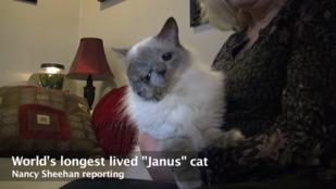 Meghalt a világ legöregebb, kétarcú macskája