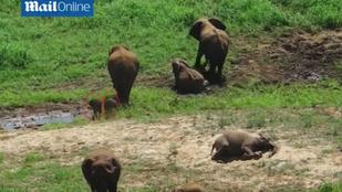 Elefántikrek születtek Dél-Afrikában