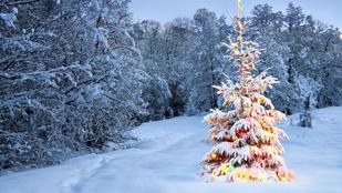 Nézegessen havas karácsonyfákat webkamerán keresztül