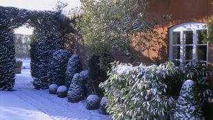 Így védekezzen a jég ellen a kertben