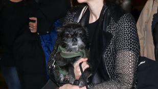 Rooney Mara kutyája megvetően néz a fotósokra
