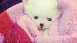Paris Hilton magáról nevezte el a kutyáját