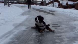A jégen hason csúszó kutyánál nem lesz ma jobb