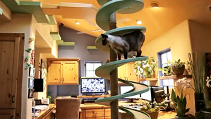 Ezeknek a macskáknak menőbb háza van, mint önnek