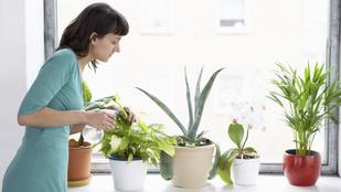 5 tökéletes légtisztító növény a lakásba