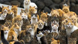 Nyugalom, megmenekültek a japán macskasziget cicái!