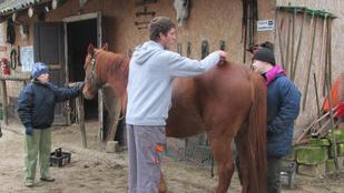 Így is lehetne: értelmi fogyatékkal élők csodája a tanyán