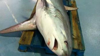 Ritka cápafajt fogtak ki Barcelonánál