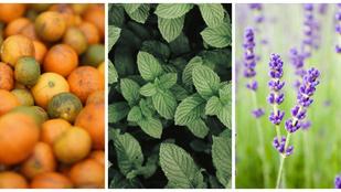 5 illat, amely pozitívan hat a szervezetére